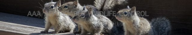 Squirrel Removal Reviews, Wildlife Removal Toronto Reviews, Wildlife Control Recommendations