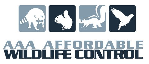 AAA Affordable Wildlife Control Toronto, Wildlife Removal Toronto