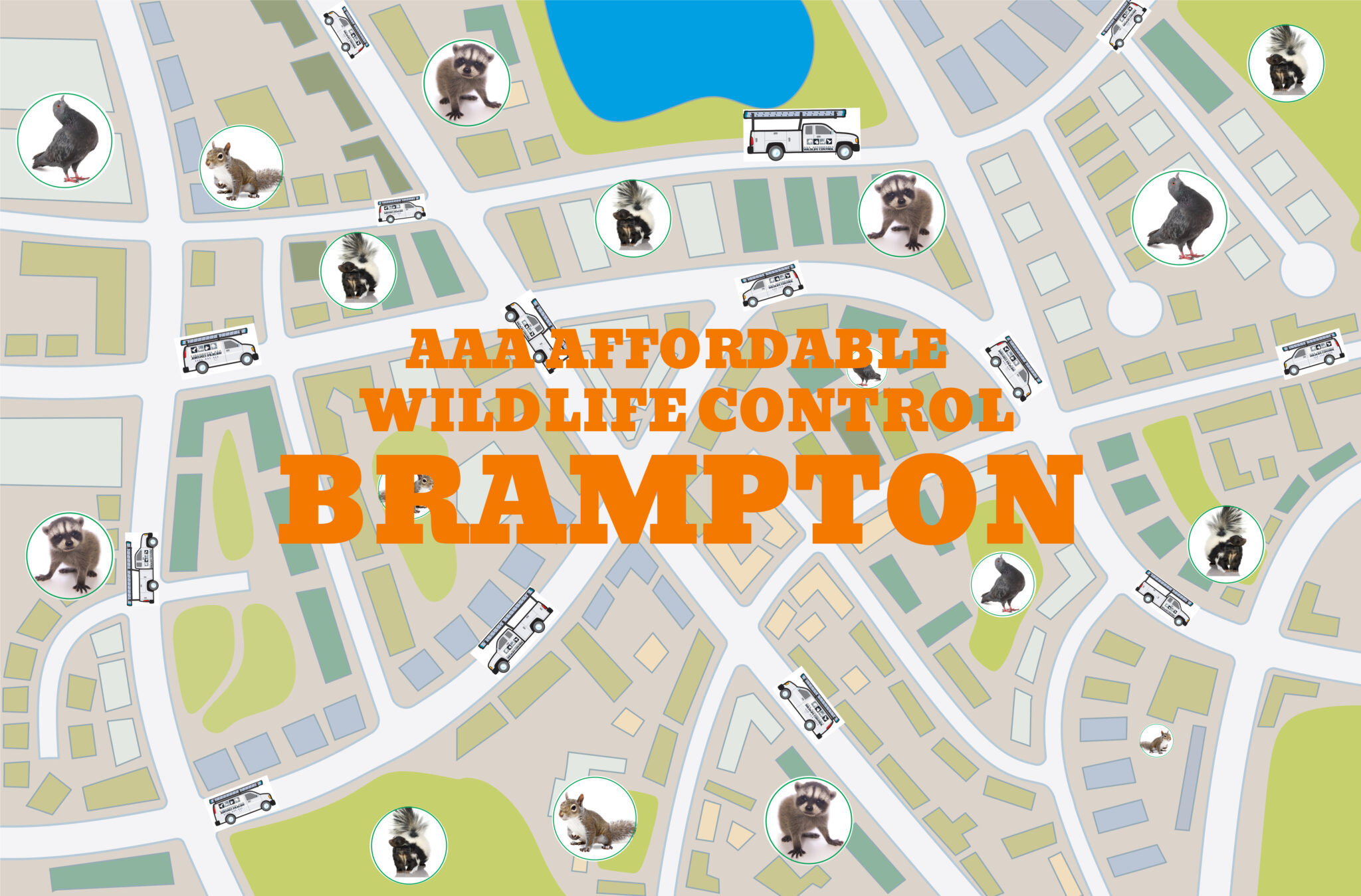 Wildlife Removal in Brampton, Squirrel Removal Brampton, Raccoon Removal Brampton