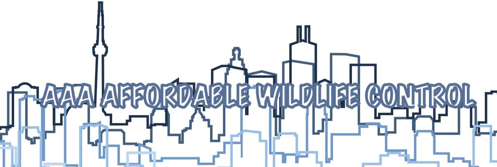 Wildlife Control Toronto Cost, Affordable Raccoon Removal Toronto Cost. Low Squirrel Removal Cost In Toronto
