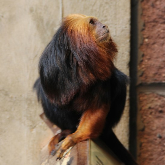 ZSL London Zoo - Rachel Oates