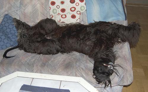 Sovställningen i soffan