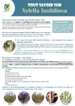Fiche-bacterie-xylella_OK-150px