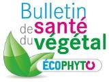 logo BSV_150