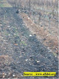 Sol amendé par du compost de grignons