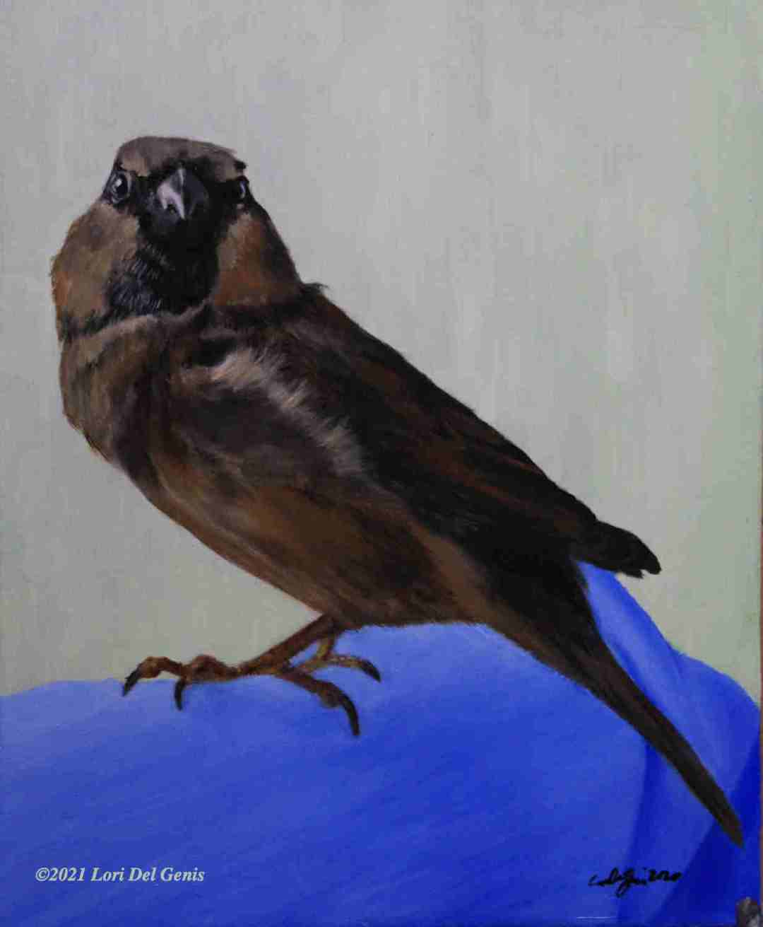 'Robin's Love' oil portrait commission of a bright-eyed English house sparrow. (Lori Del Genis, 2021)