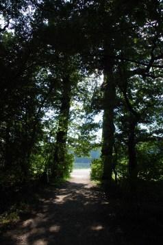 The woods at Schönbrunn