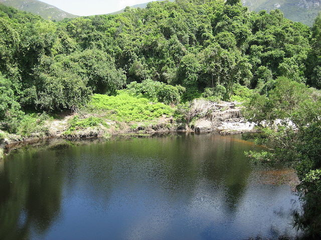 Wilderness_National_Park in garden route