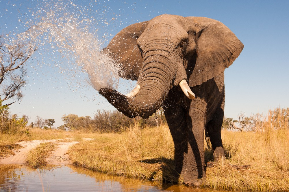 Victoria Falls Wallpapers High Resolution 15 Things To Do In Botswana For The Whole Family Page 2