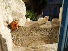 Colo de vacances pour moines crétois