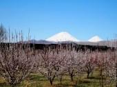 Iran - Mont Ararat sous le printemps