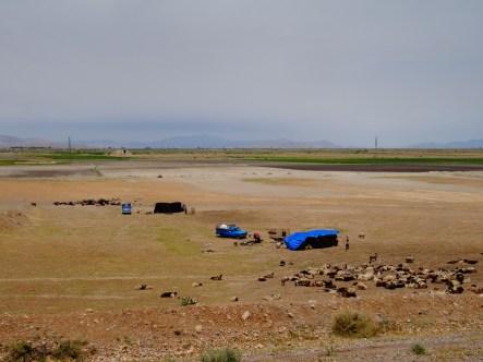 Des bédouins et leurs chèvres
