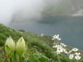 Inde - La vallée des fleurs