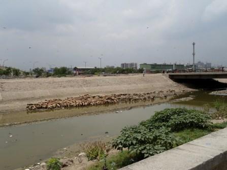 L'abreuvoir aux immondices de Delhi