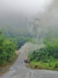 Myanmar : A travers la jungle