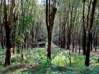 Une maison dans la plantation