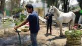 Los animales son alimentados y bañados por voluntarios.