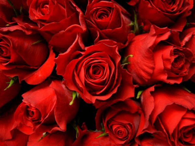 Frasi E Aforismi Sulle Rose