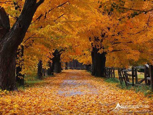 autunno_3351_opt