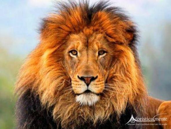 Frasi, citazioni e aforismi sulla fierezza e l'essere fiero -  Aforisticamente