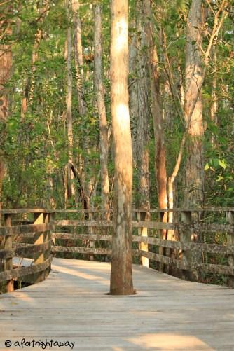 Tree own way wood