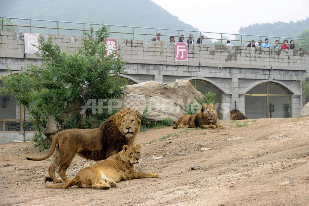 ようやく動物保護法の制定に著手,動物園の「劣悪環境」有名 ...