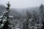 猛暑の次の朝は降雪..気温差31度 米コロラド州で突然冬が到来