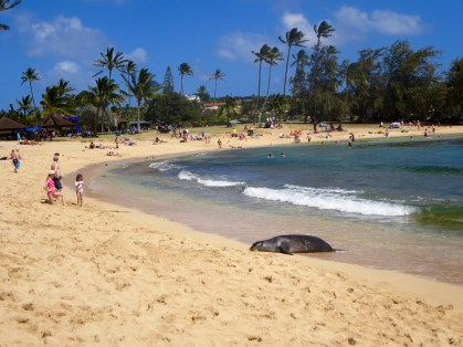 Monk seal at Poipu Beach Park