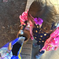 5 Community Volunteering Ideas to Do with Your Preschooler