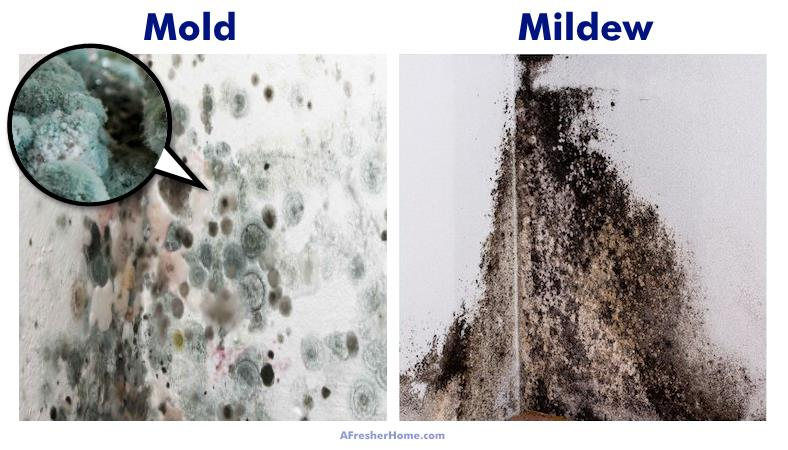 Mold Vs Mildew: What Are The Differences? Plus Black Mold ...