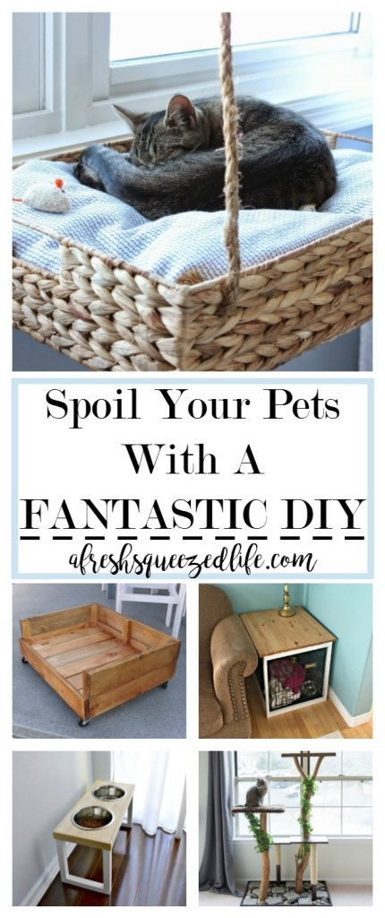 I have a dog and a cat and I love them! If you are a looking for a fun project to tackle, DIY projects for pets might be just the thing! SPOIL YOUR PETS WITH A FANTASTIC DIY