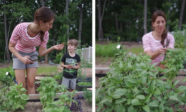 DIY Garden Herbs Basil for Pesto