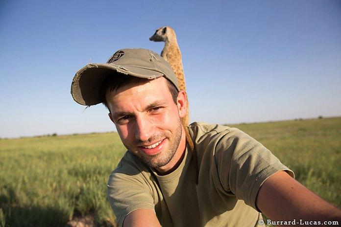 meerkats-human-lookout-post-photography-will-burrard-lucas-2