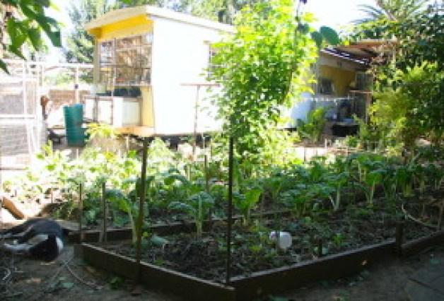 我が家のトレーラーハウス。家庭菜園と、夫のワークショップ、ニワトリ小屋もある。