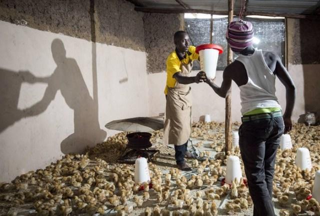 農業分野でアフリカの若年層雇用を振興!UNIDOとFAO、共同でイニシアティブを発足!