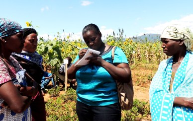 Researchers get farmers views on the improved groundnut varieties