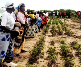 Farmers comparing the perfomance of their varieties of groundnut against the new improved varities being introduced by the project. regoundthe