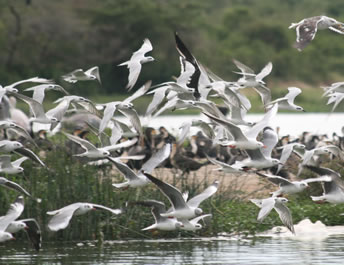 Birding Queen Elizabeth National Park
