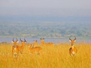 Game Drive Murchison falls National Park