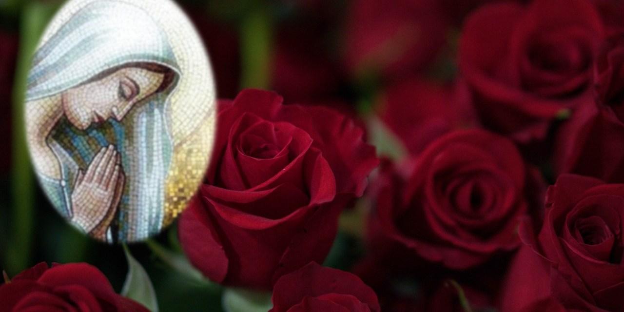 Jour 1. ROSE COMMUNE –  LA CHARITE