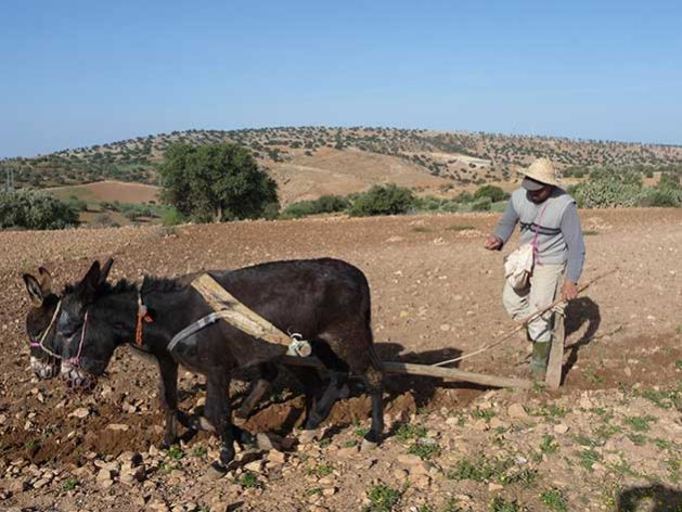 Learning From Indigenous People: My Morocco Diary