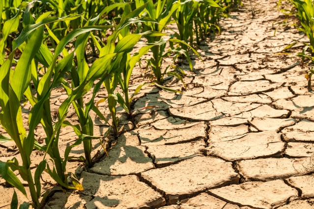 Building Greater Sustainability, Climate Resilience In West Africa