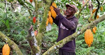 There was an increase in the illegal trade of cocoa from Côte d'Ivoire, the world's number one producer, to Ghana