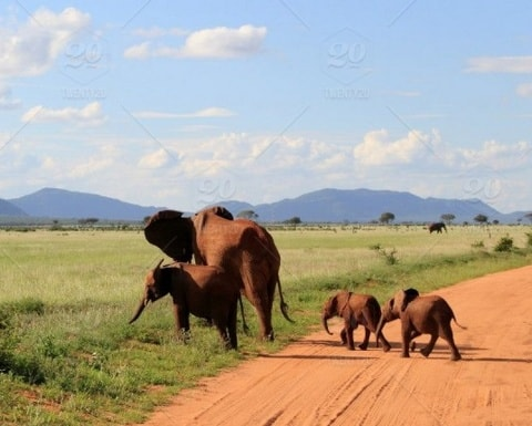 Kenia-elifanten