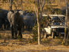 chobe-game-lodge10