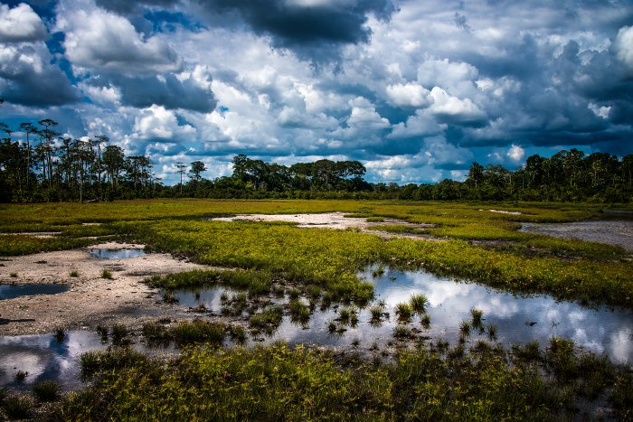 Out of this world images of OdzalaKokoua National Park
