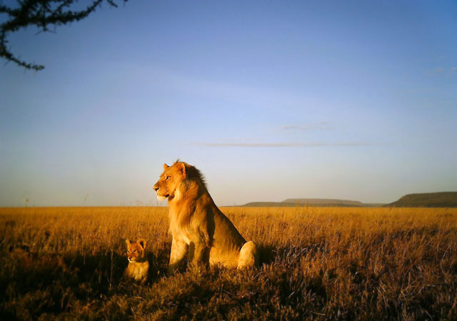 Cute Wallpapers Of All Kind Of Animals The Serengeti Needs You Africa Geographic