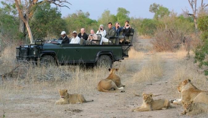Wild Wings Safaris