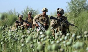 US-troops-opium-field-Afghanistan-400x239