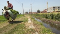 Ancient Egyptian river could be revived for farming ...